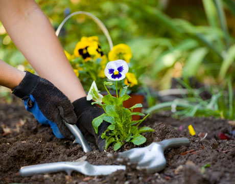 Gardening 101: CAI Tips for Your Outdoor Gardening and D.I.Y